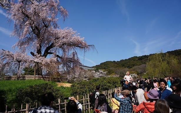 Quoi voir a Kyoto