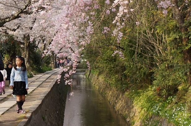 kyoto que visiter